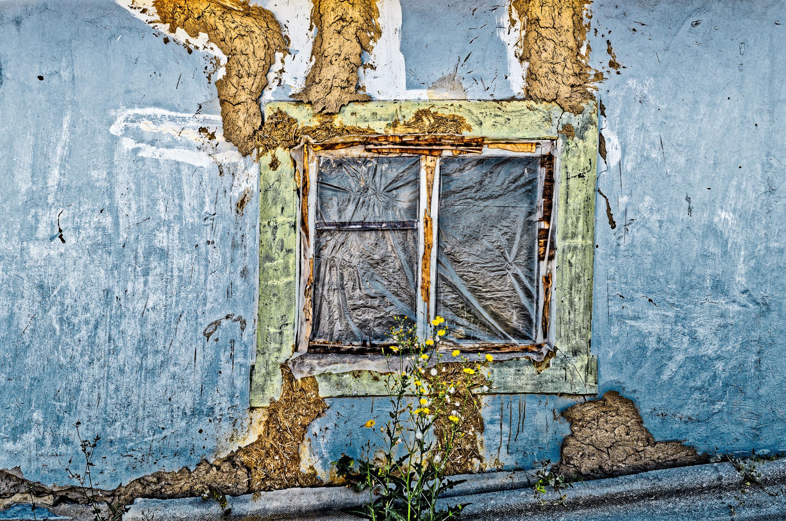 Flori la fereastră - Galerie de fotografii Marcel Eremia