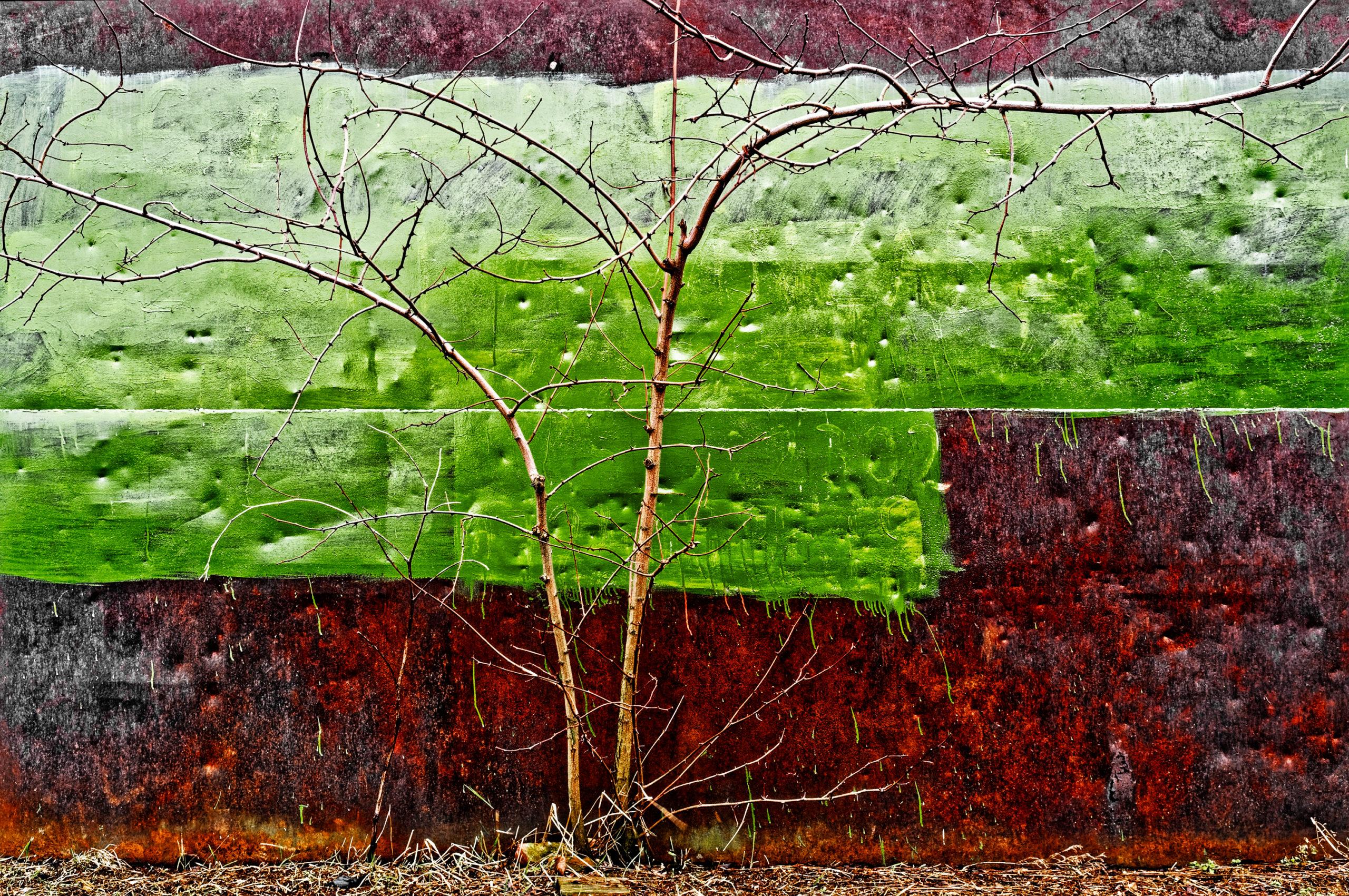 Viața merge mai departe - Galerie de fotografii Marcel Eremia